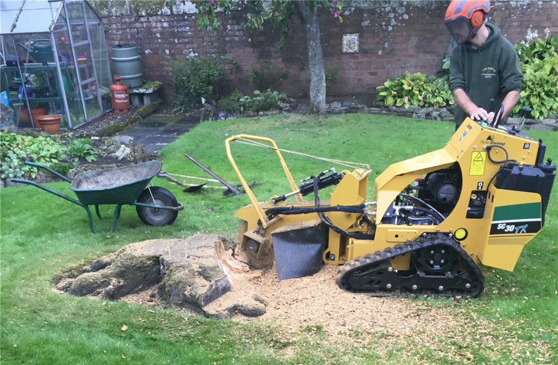 tree-stump-removal-Didsbury-Manchester