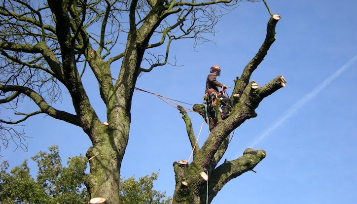 tree-surgeon-Didsbury